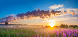 gorgeous sunset of flowered fields