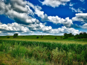 picturesque green pasture and bright blue sky with fluffy clouds