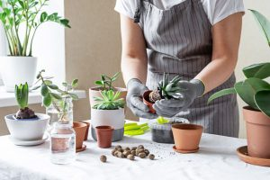 person in apron planting succulents in small pots - stress - COVID-19