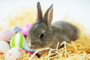 bunny in straw nest with Easter eggs